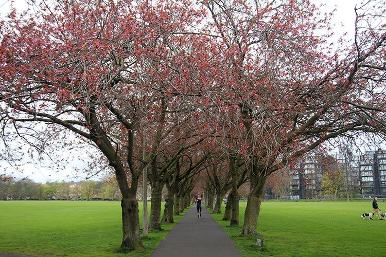 que hacer en edimburgo: parques