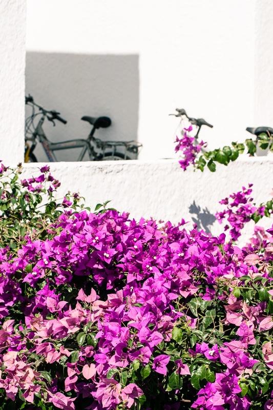 Santorini, bouganville