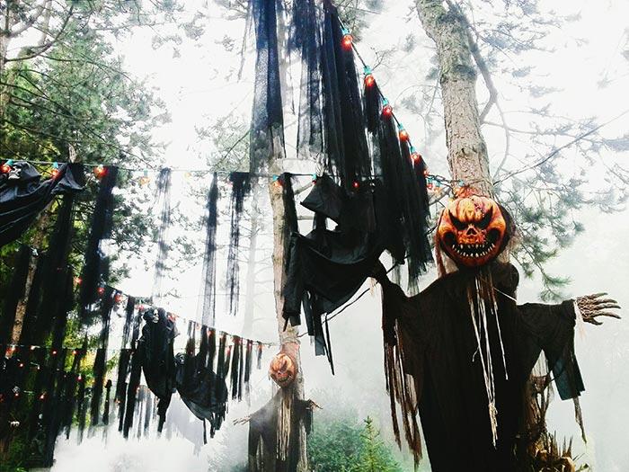halloween en España: bosque