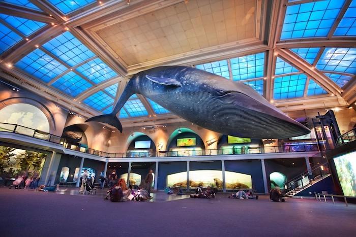 Qué hacer en Nueva York: museo de historia natural
