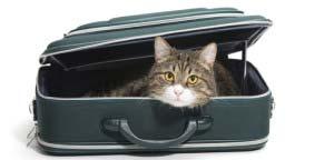 animaux-voiture