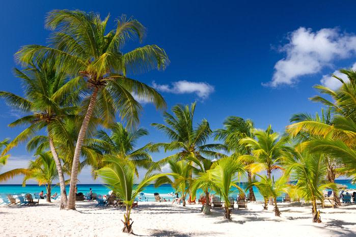 Qué hacer en Punta cana: playa con cocoteros