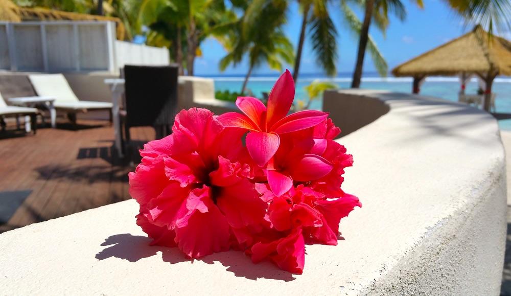 fiori delle isole cook