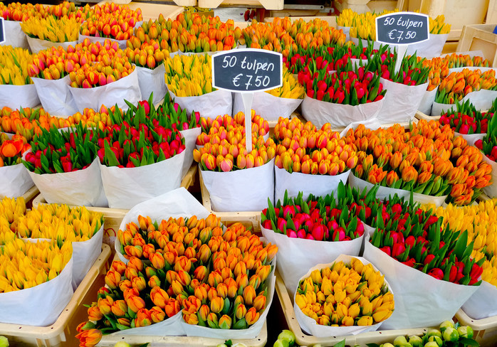 Alrededores de Amsterdam: mercado de tulipanes