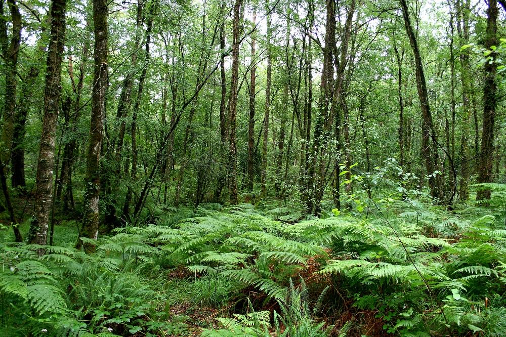 Foresta di Broceliande