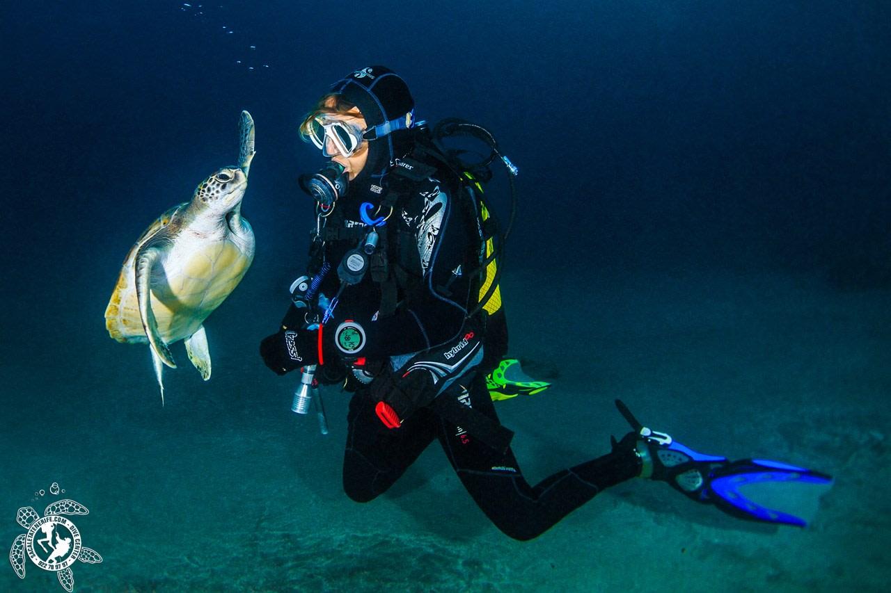 tortuga marina tenerife buceo