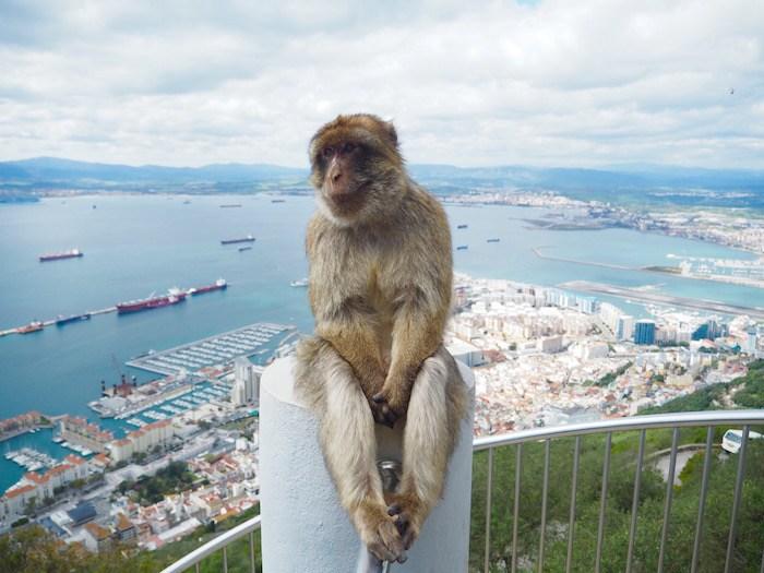 monos en el peñón de gibraltar
