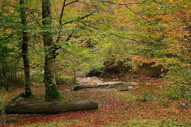 otoño en la selva de irati en navarra españa