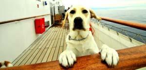 animaux-bateau