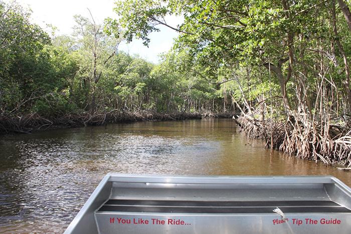 Qué ver en Miami: Parque Everglades