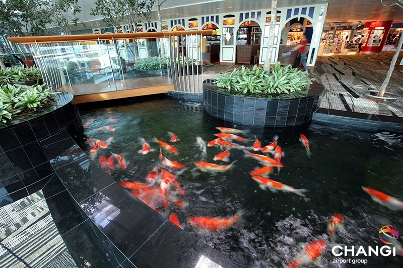 aeropuertos del mundo: Naturaleza y jardines en la sala de tránsito de la terminal 3 – Estanque Koi.