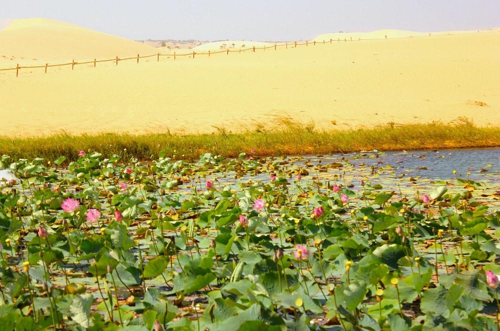 Il deserto bianco Vietnam 1000
