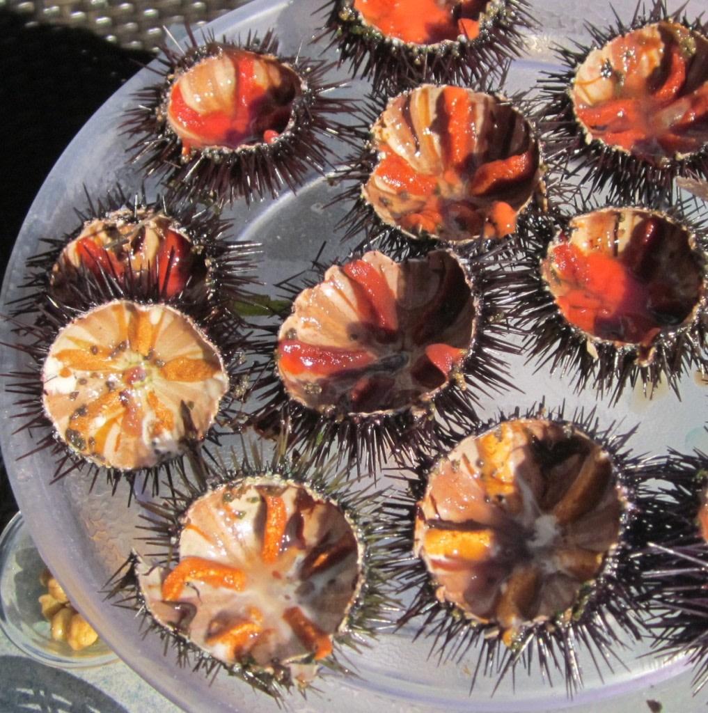 erizos-de-mar-en-corcega