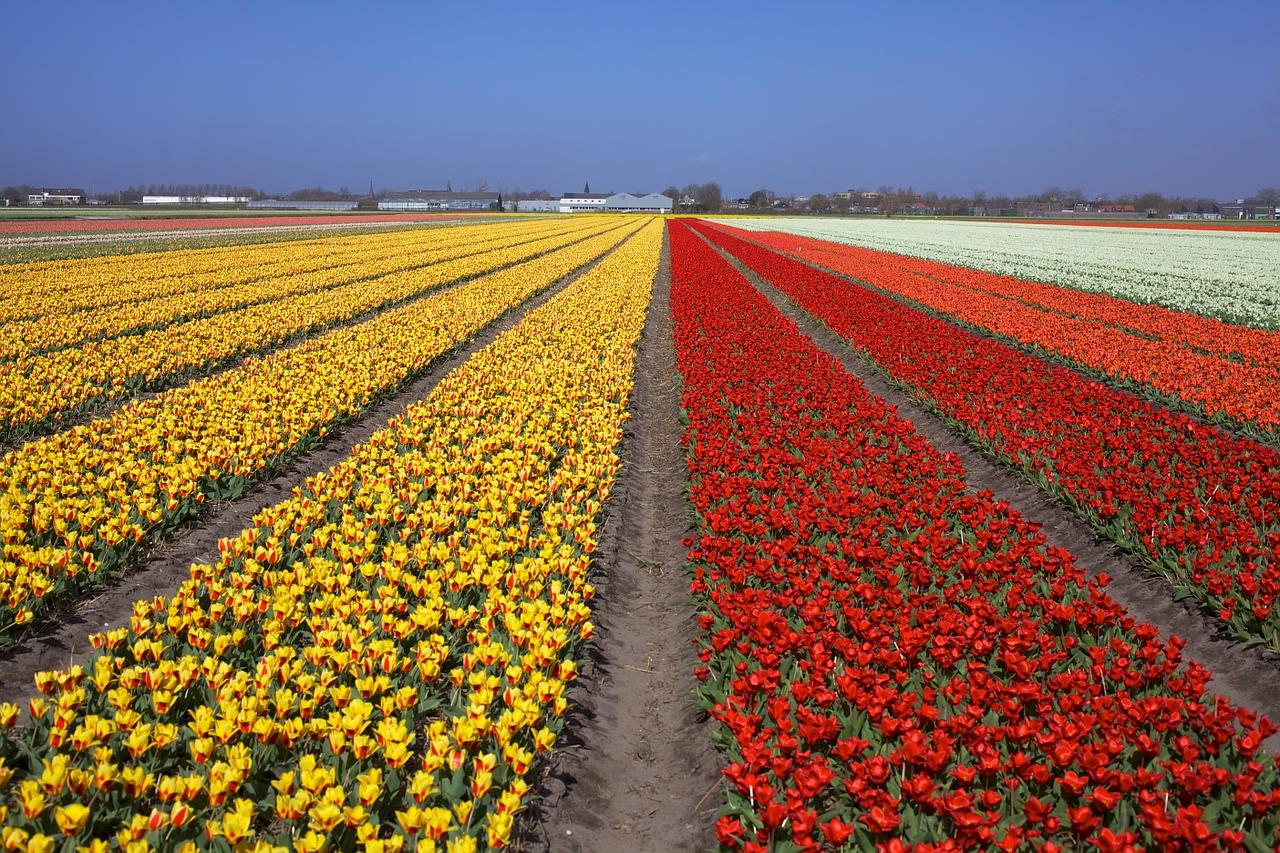 Il parco di Keukenhof, , tra i luoghi più colorati del mondo