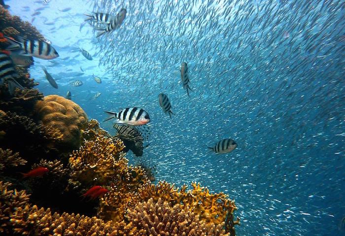 arrecifes de coral en palaos