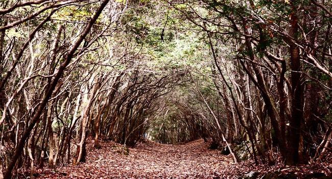 fenomenos paranormales en el bosque de aokigahara japon