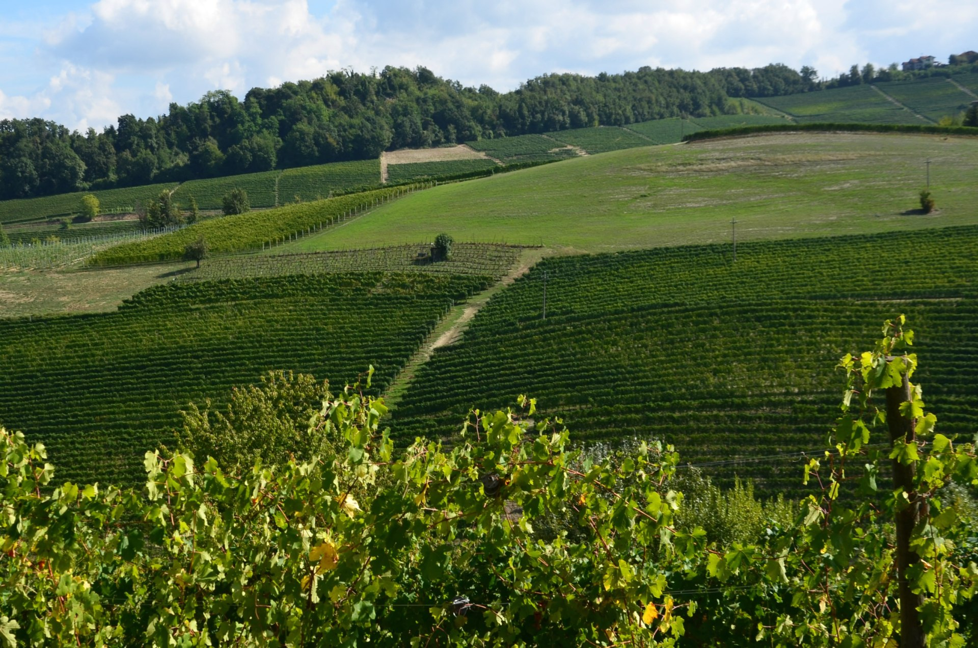 weekend_langhe_vigneti