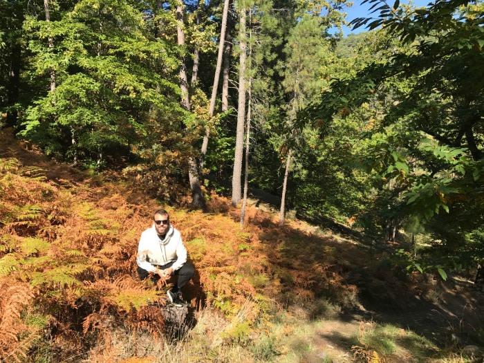 Sierra de Gredos: Bosques de castaños en otoño.