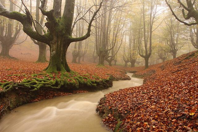 otoño en el Hayedo de Otzarreta país vasco