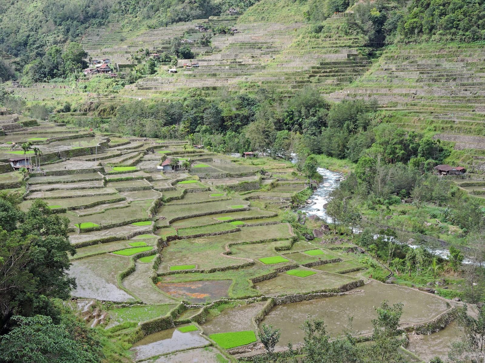 Le risaie di Hapao, Filippine