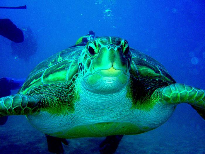 Qué ver en Tenerife: Tortugas marinas