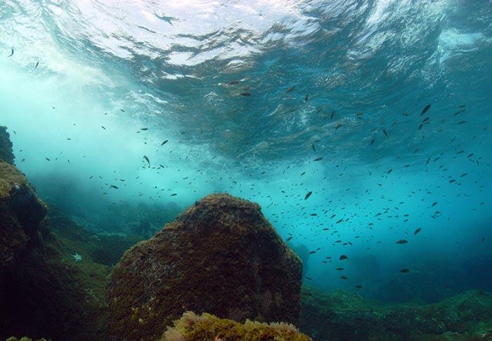 fondo marino en el hierro islas canarias