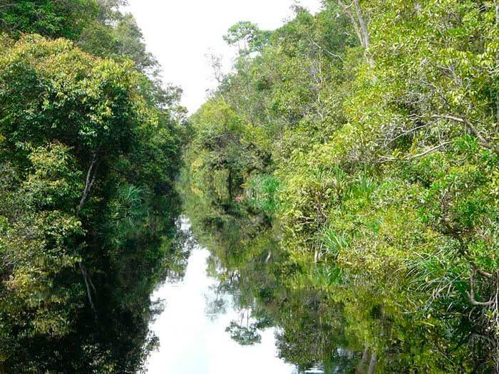 Parque Nacional de Tanjung Puting selva de borneo