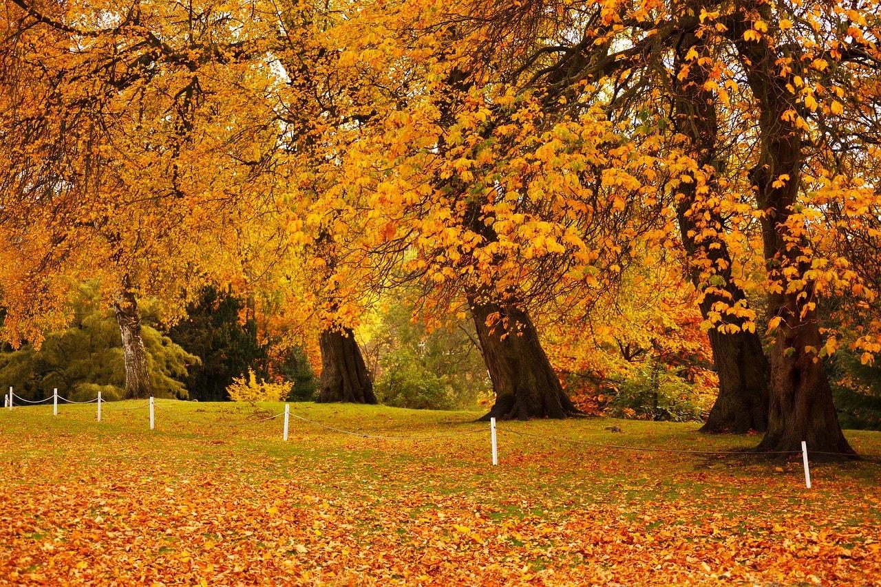Foliage a Dublino