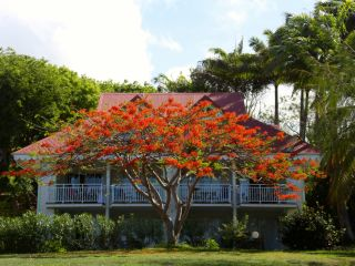 Urlaub Sainte Anne de Guadeloupe im Pierre & Vacances Sainte Anne Holiday Village