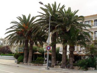 Urlaub Port de Pollença im Romantic