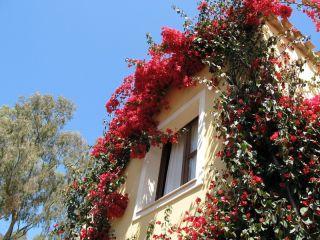 Urlaub Arbatax im Residence Borgo degli Ulivi