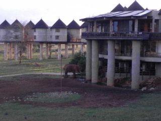 Urlaub Tsavo-West-Nationalpark im Sarova Salt Lick Game Lodge