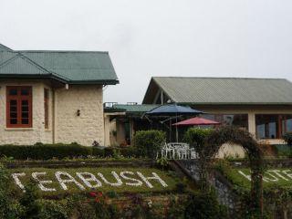 Urlaub Nuwara Eliya im Tea Bush Hotel