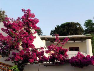 Insel Stromboli im La Sirenetta Park Hotel