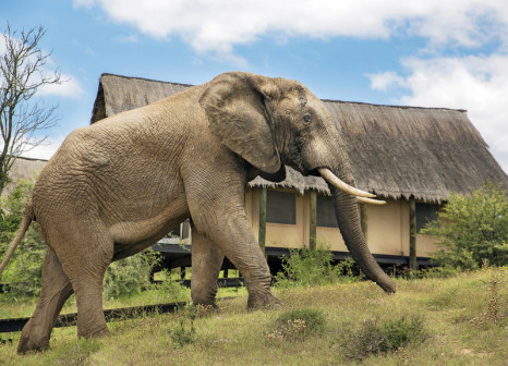 Hotelzimmer mit Internetzugang im Gorah Elephant Camp
