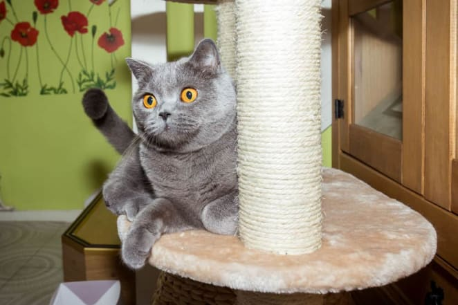 How to Build a Cat Tower from Scratch 2