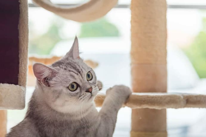 How to Build a Cat Tower from Scratch 3