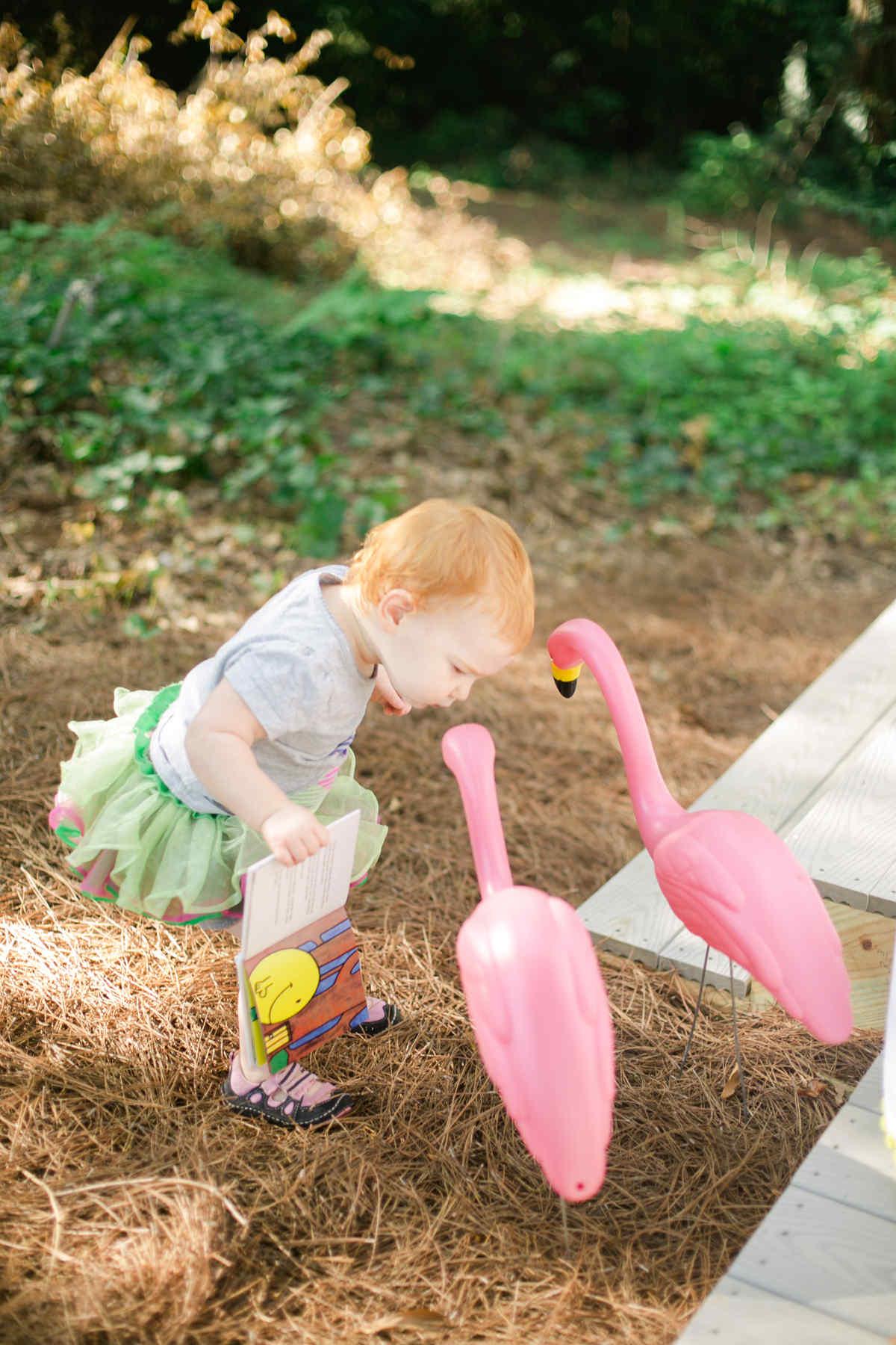 pink flamingoes