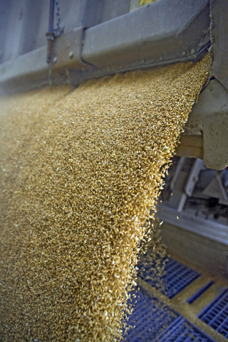 South Africa prohibits seed and milling deal