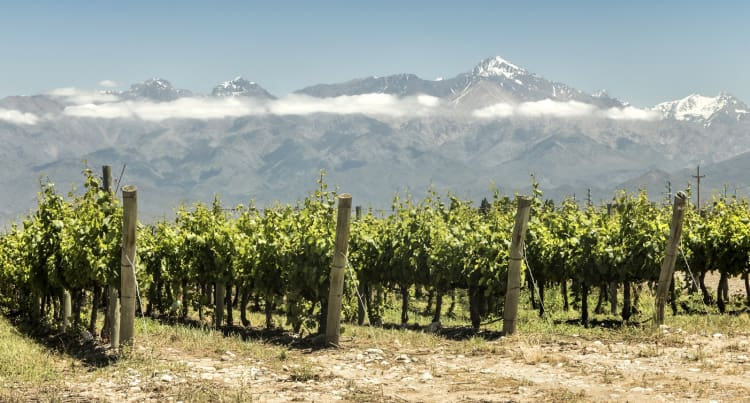 Chile's Viña San Pedro attracts Chinese distillery