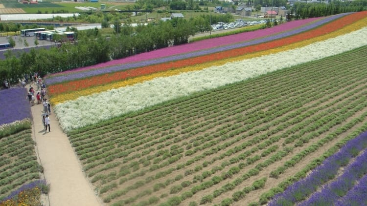 Japan stamps out bid rigging in agriculture sector