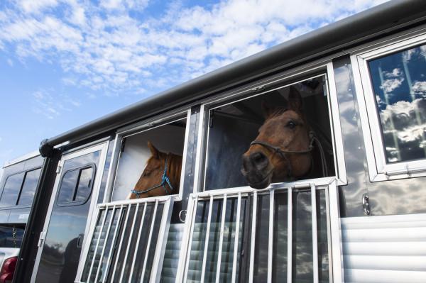 Equestrian Trailer Windows