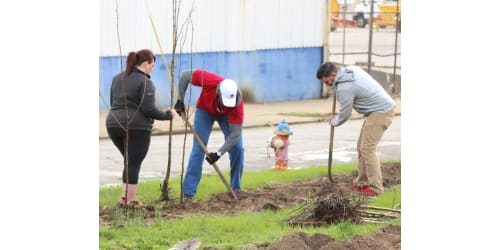 Lippert Components Plants Trees for Arbor Day