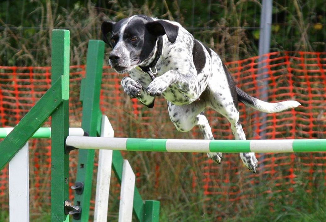 Dog jumping tricks
