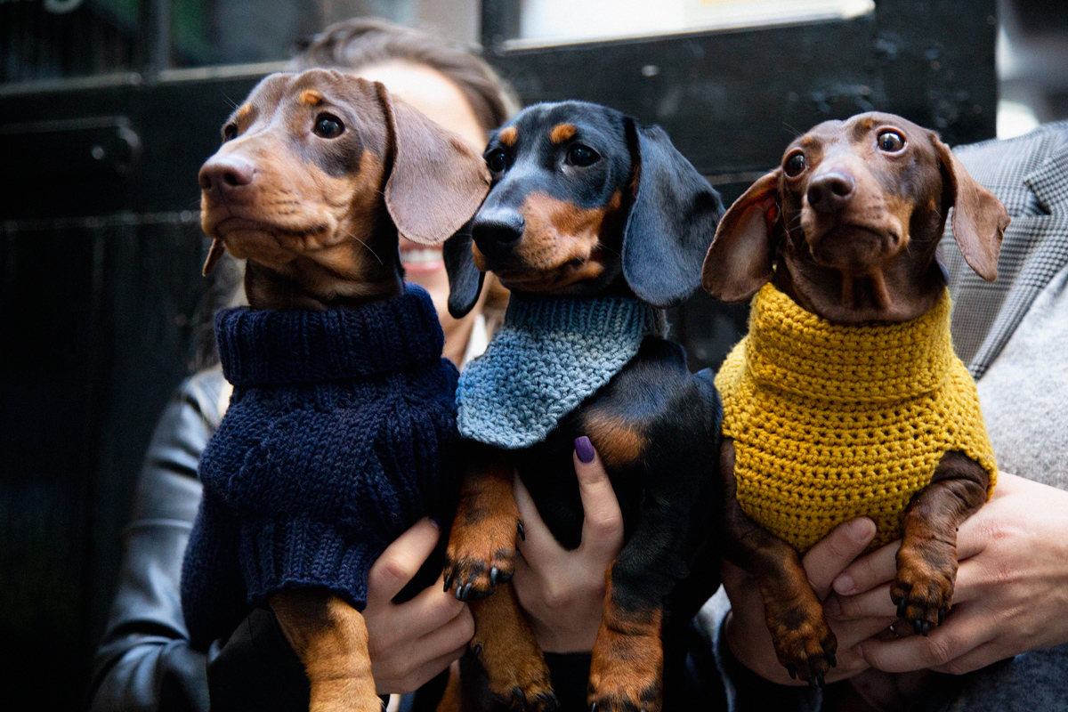 Fashion three dogs