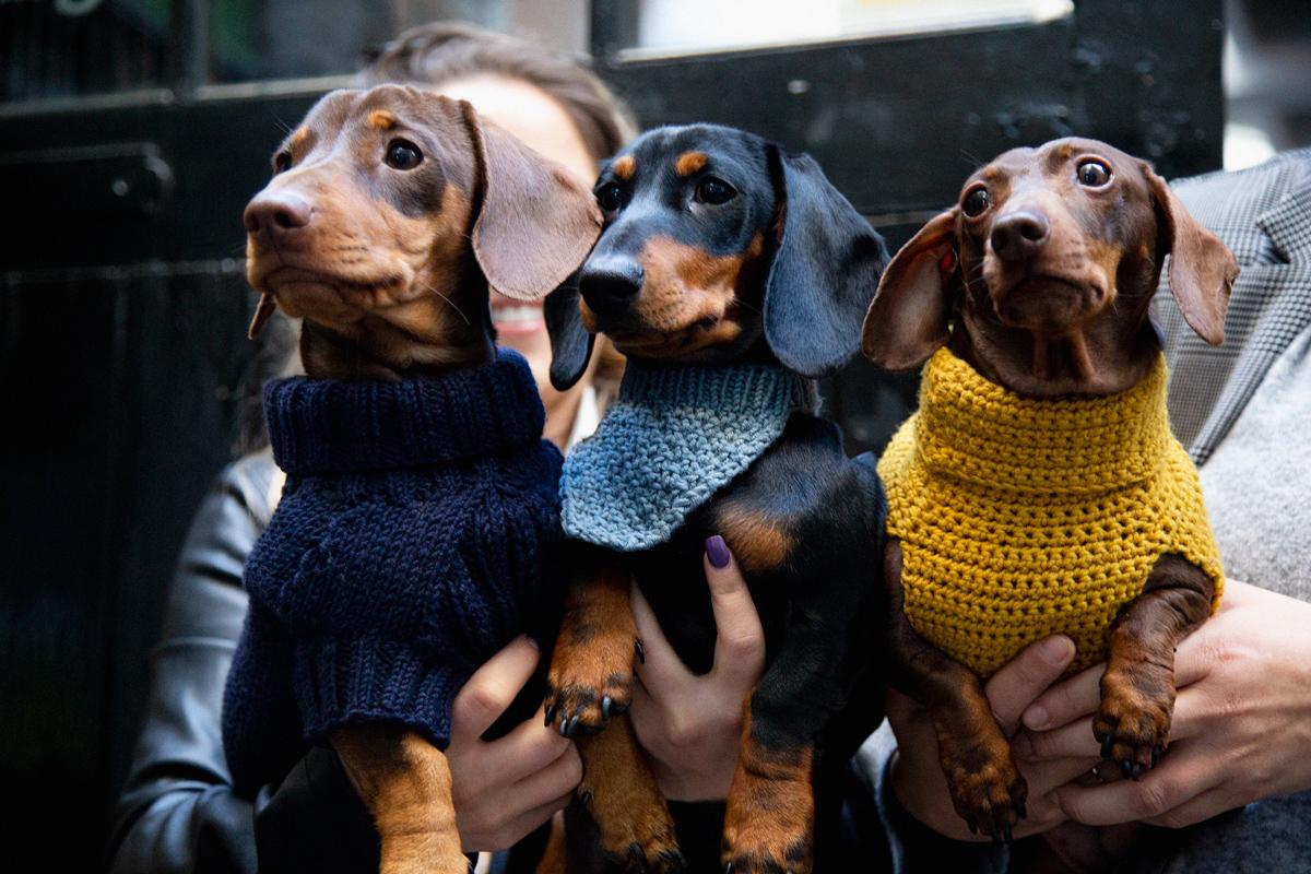 Fashion three dogs