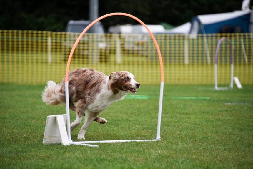 Hoopers dog sport