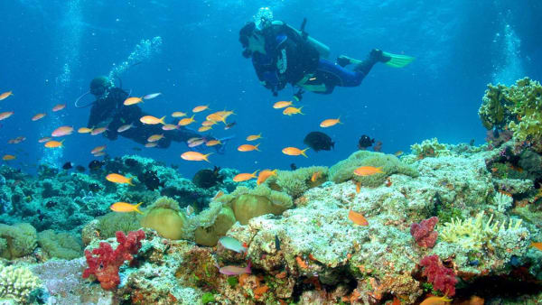 Scuba diving trips take travelers to another world