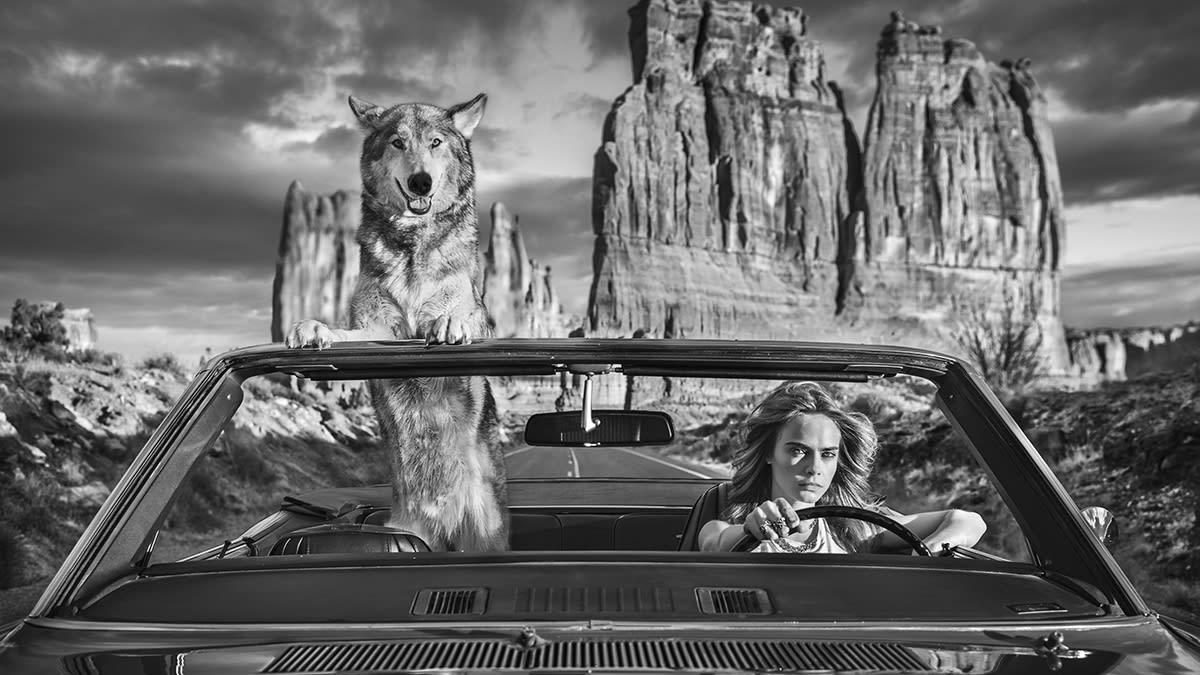 drive the wild west david yarrow