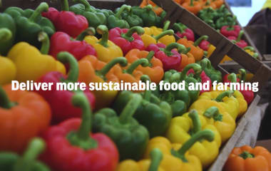 Delivering More Sustainable Food and Farming - LEAF's Global Impacts Report 2019